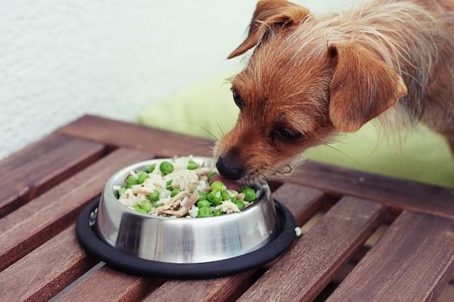 żywienie_psa