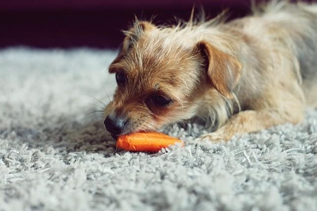 żywienie_psa_4