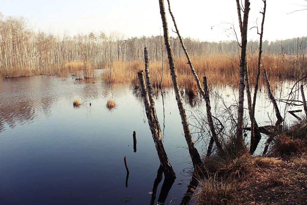 mazowiecki_park_krajobrazowy_11