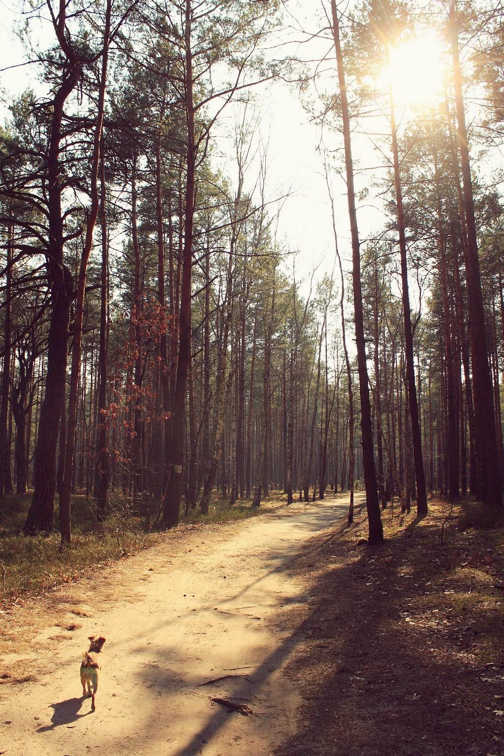 mazowiecki_park_krajobrazowy_2