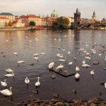 Czeska Praga w jeden dzień