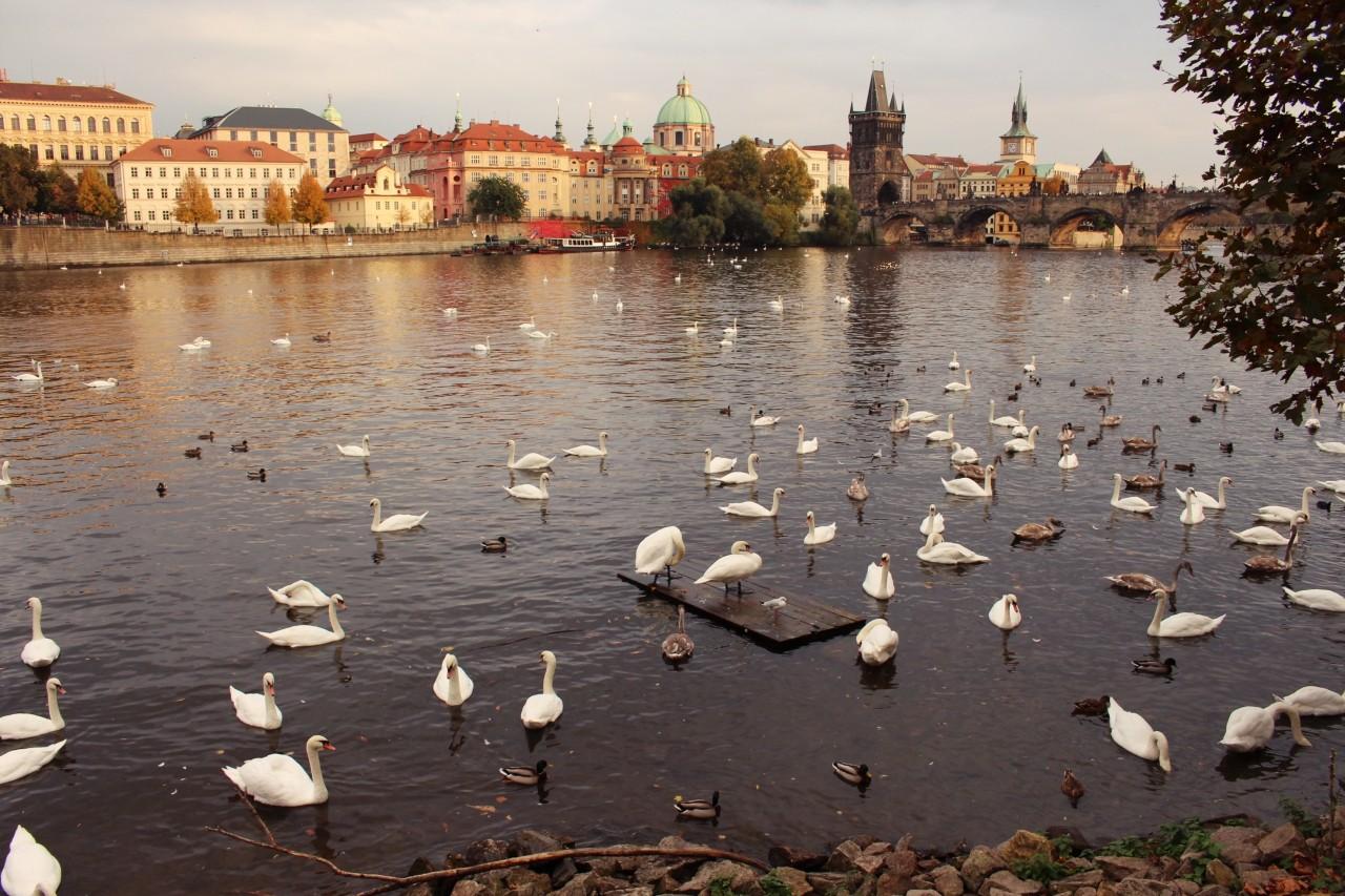 Praga-w-jeden-dzien