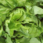 Która sałata jest najzdrowsza + jak kupować i przechowywać sałatę