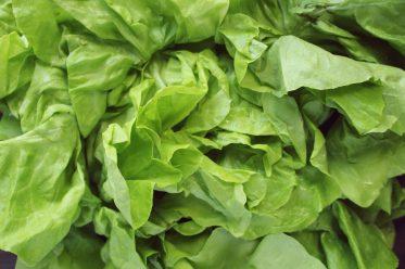 Ktora salata jest najzdrowsza