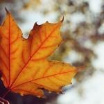 O jesieni pozytywnie – zdjęcia + film