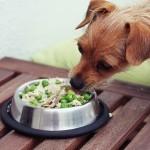 Zdrowe odżywianie psa ;)
