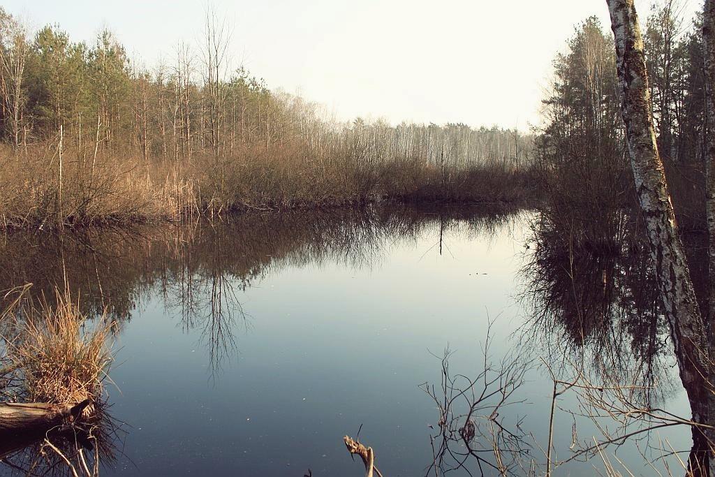 mazowiecki_park_krajobrazowy_15
