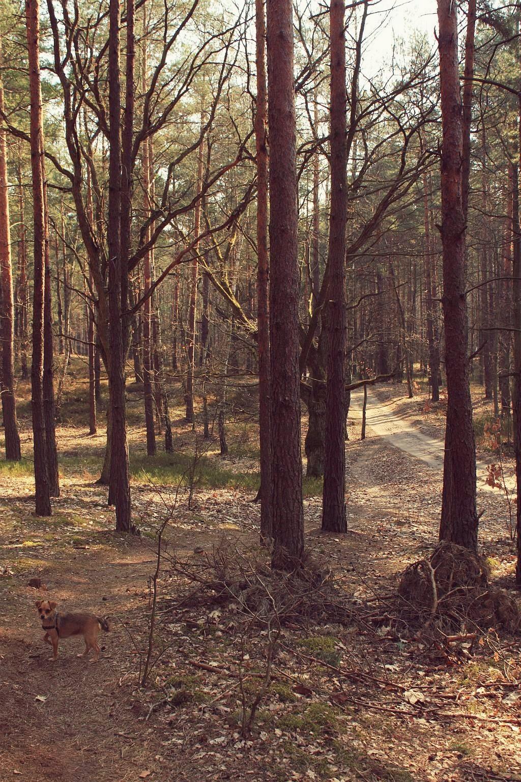mazowiecki_park_krajobrazowy_3