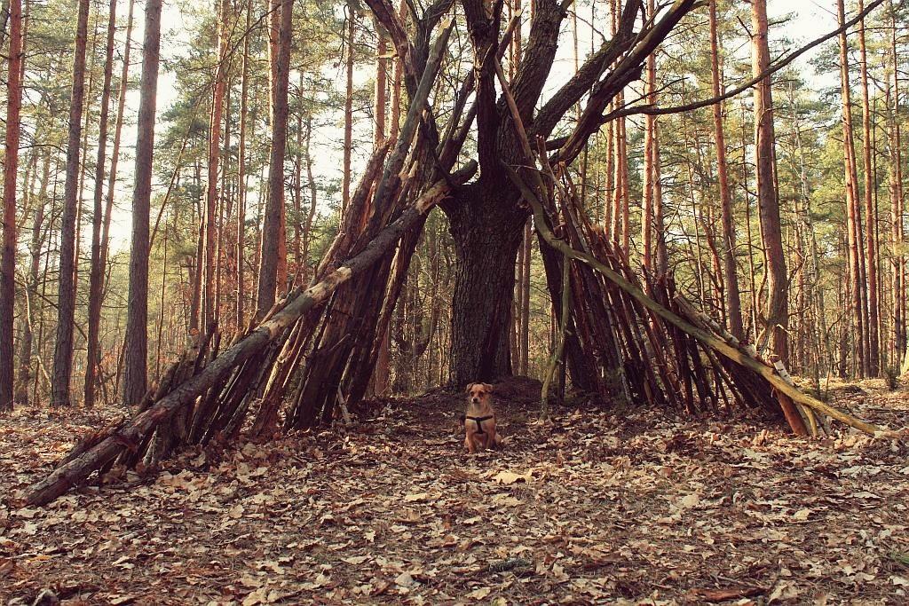 mazowiecki_park_krajobrazowy_8