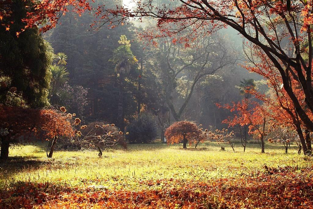 batumi_ogród_botaniczny
