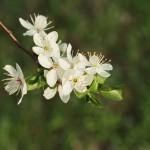 Wiosenna mobilizacja – wyzwanie i moja lista wiosennych planów