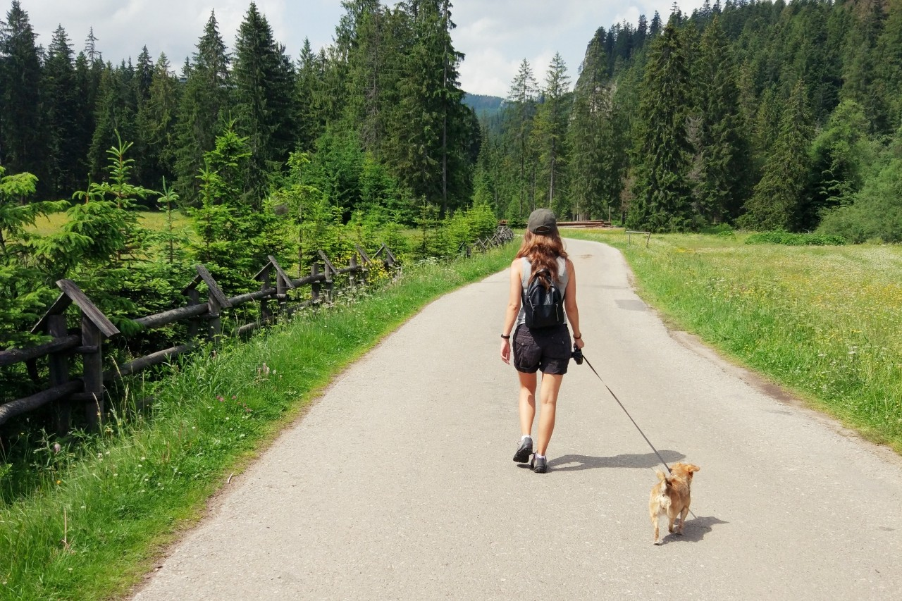 dolina chocholowska z psem